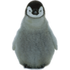 Animal Desktop - Boxshot