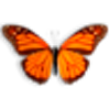 Butterfly On Desktop