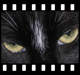 PhotoFilmStrip - Boxshot